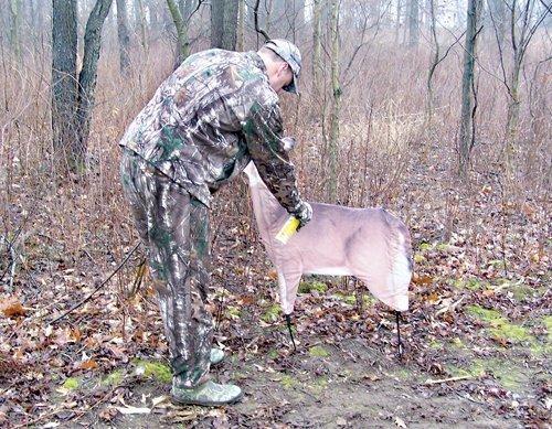 Deer and Decoys