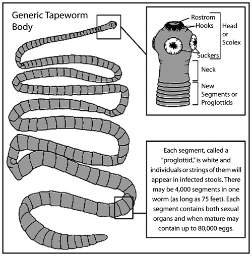 FISH TAPEWORMS