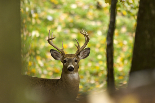 BREAKING NEWS: DNR wants hunter input on proposed 2020 deer hunting regulations