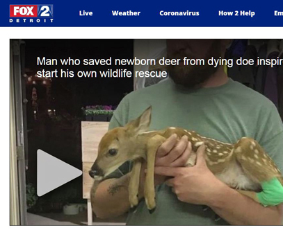 Fawn Rescue Caught on Tape