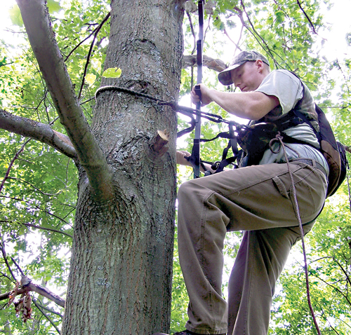 Last-minute tips for Bow Opener