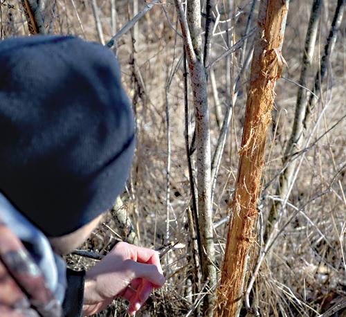Spring Deer Hunting